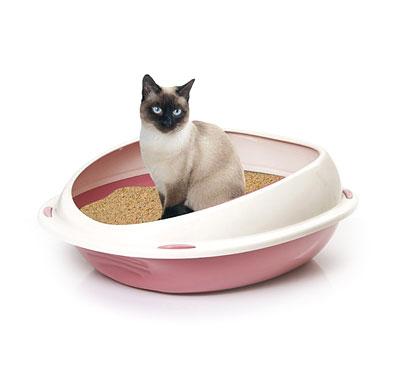 Litières et maisons de toilette pour chats