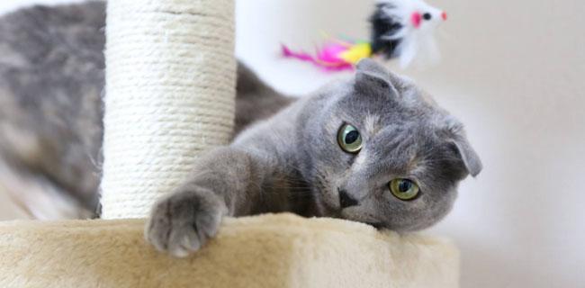 Arbres et griffoirs pour chat